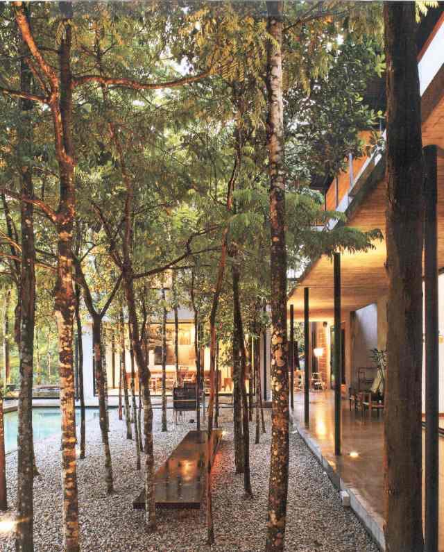 Espace arbres