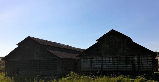 Old puddy rice near Bago